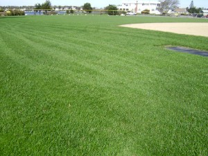 Athletic Field Landscape Maintenance in Southeast Massachusetts - Residential Lawn, Tree & Shrub Care