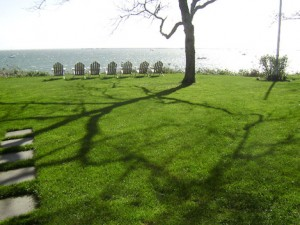 Residential Lawn, Tree & Shrub Care on Cape Cod
